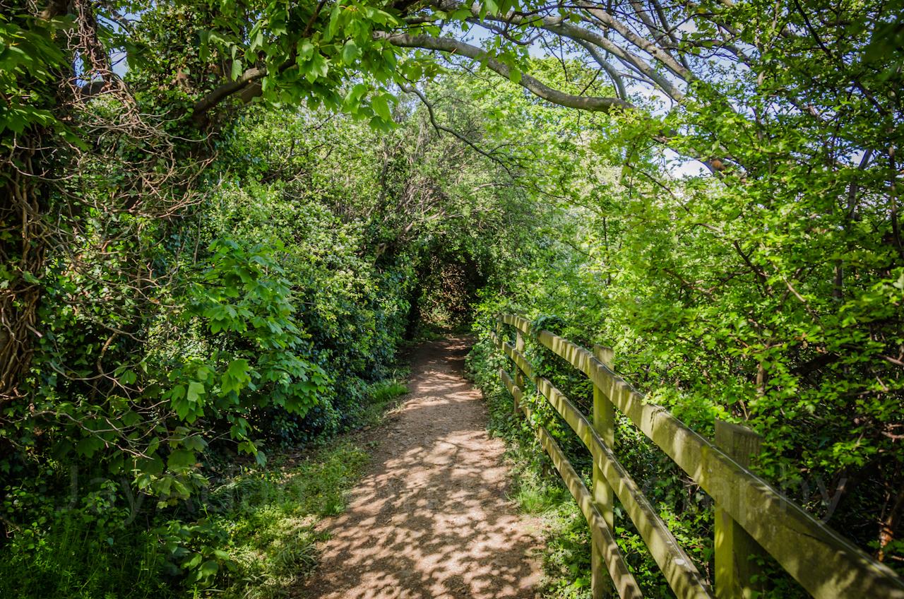 Bryn Euryn nature trail