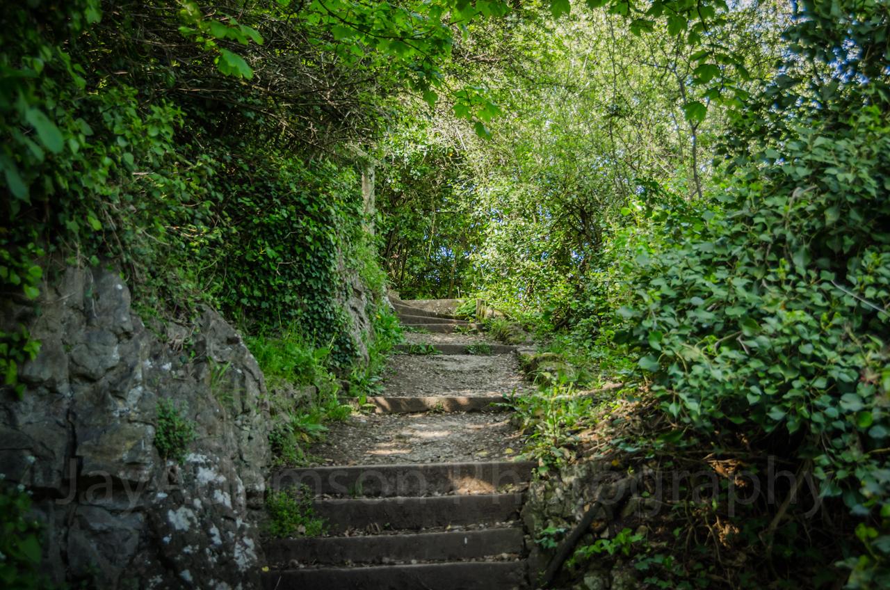 Steps to Bryn Euryn ruins